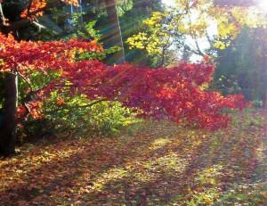 302 autumn